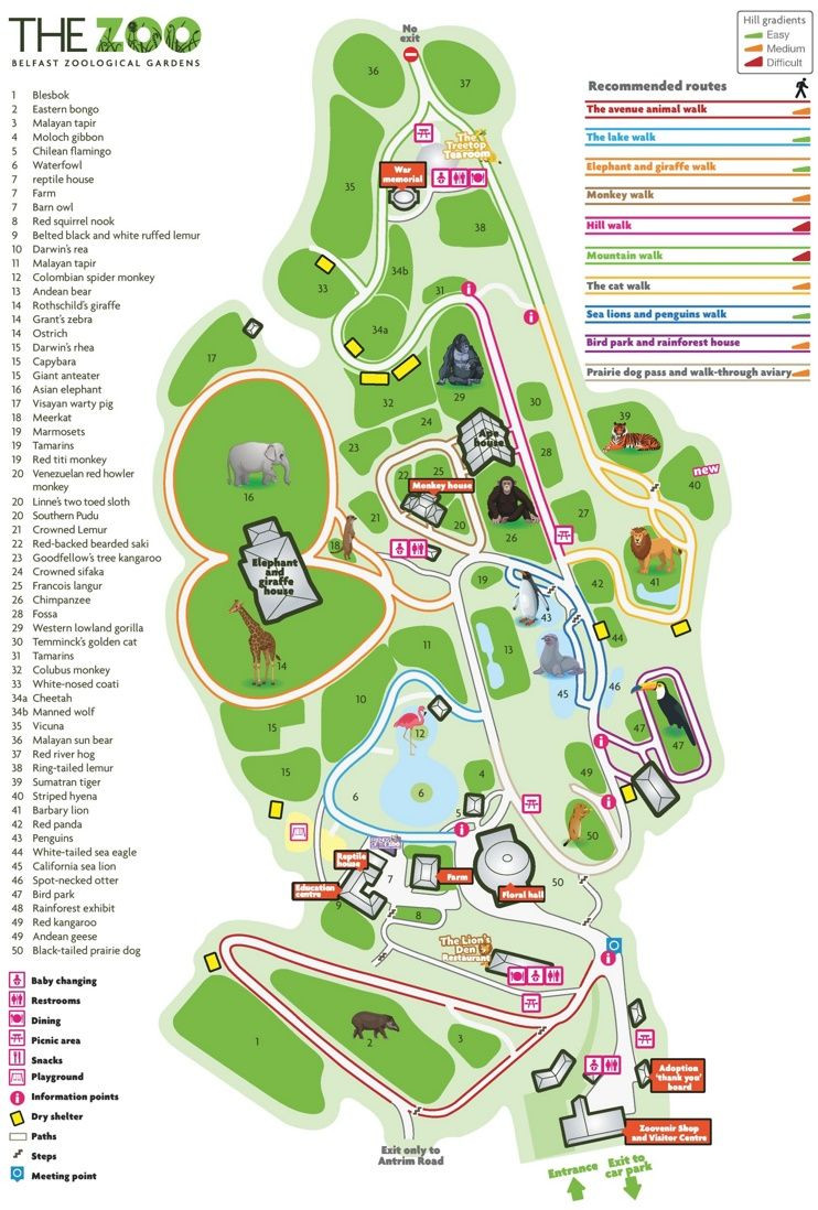 Belfast Zoo map Maps Pinterest