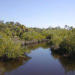 Charlotte Harbor Preserve State Park With Charlotte Harbor Preserve State Park Trail Map