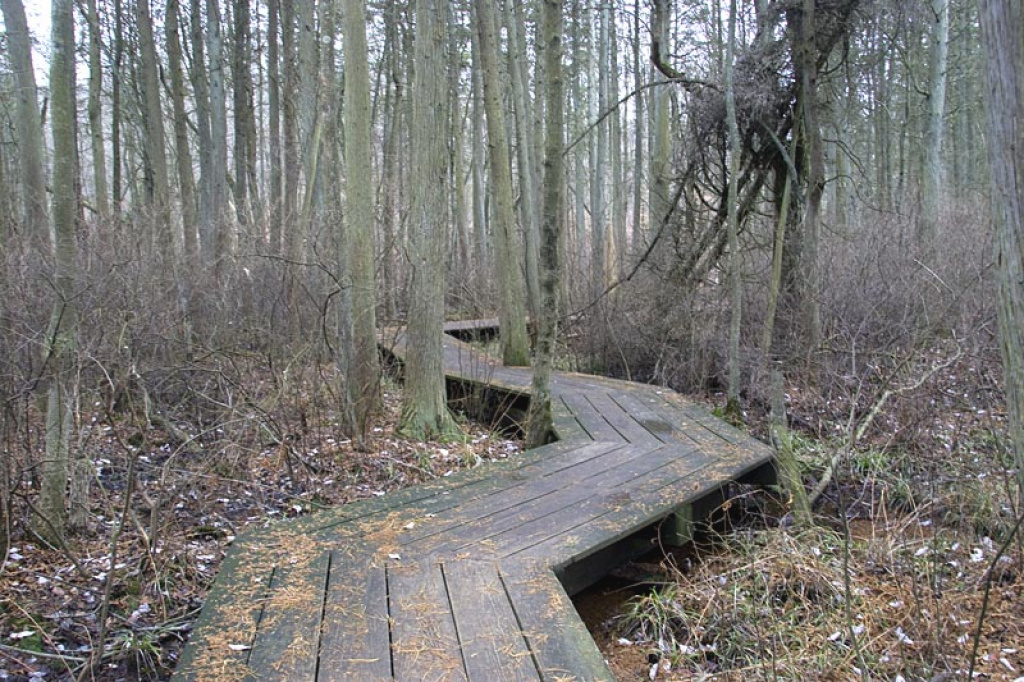 Cheesequake State Park – Blue Trail | Njhiking pertaining to Cheesequake State Park Trail Map