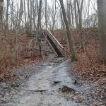 Cheesequake   Yellow, Blue, And Green | Njhiking With Cheesequake State Park Trail Map