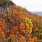 Fall Foliage Map: Best Places To See Leaves Changing Color In With Regard To New York State Foliage Map