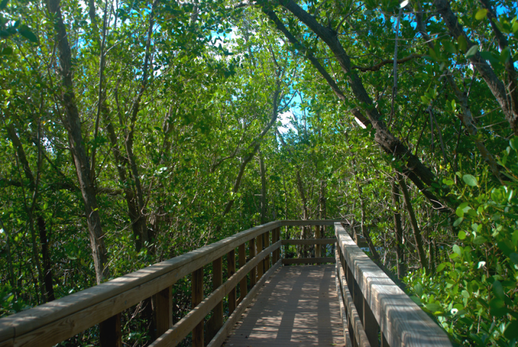 Hiking In Charlotte Harbor | Florida Hikes! with Charlotte Harbor Preserve State Park Trail Map