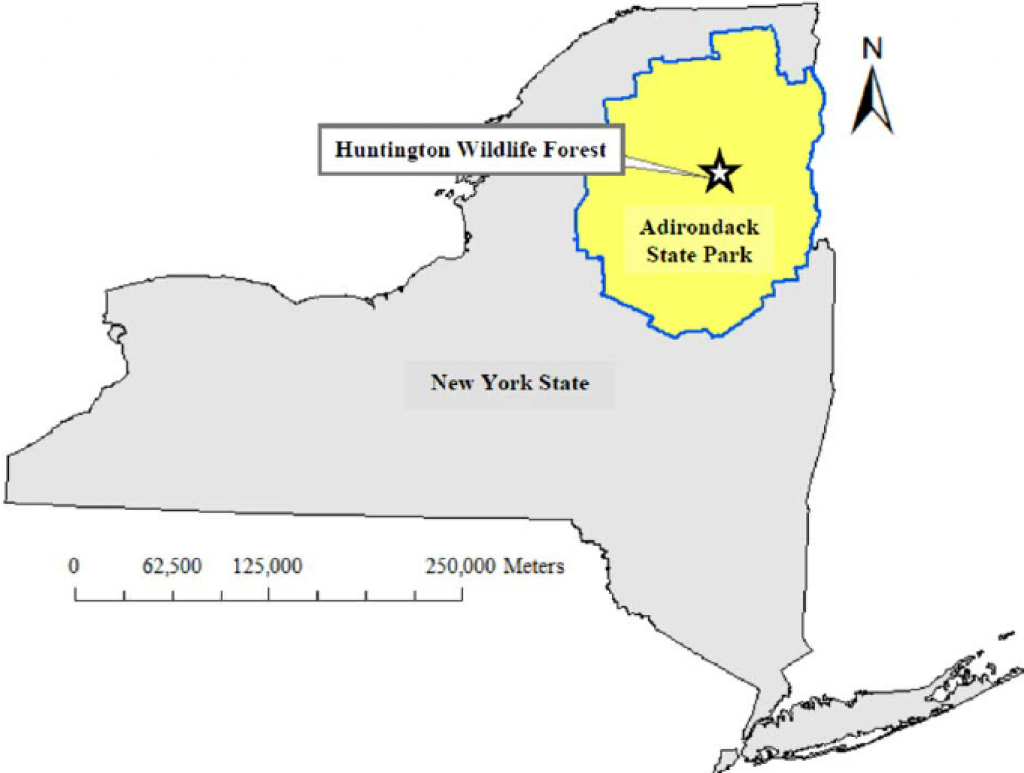 Map Of New York State, The Adirondack State Park, And Huntington inside New York State Forests Map