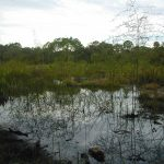 Old Datsun Trail | Florida Hikes! Throughout Charlotte Harbor Preserve State Park Trail Map