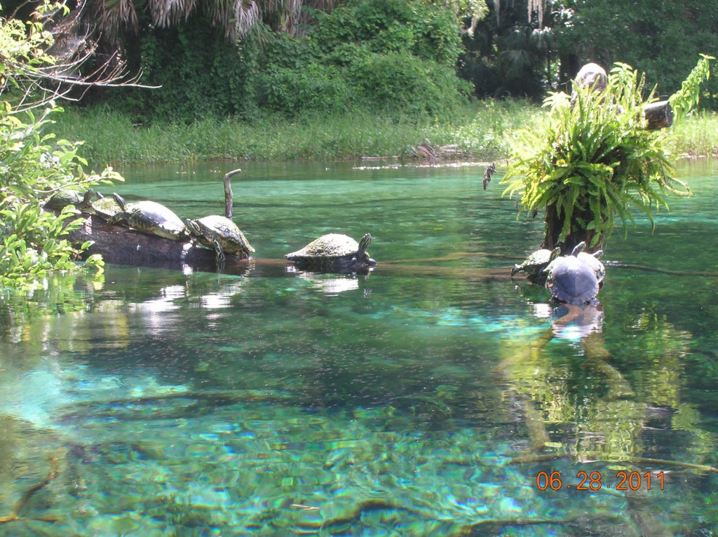 Sleeps Two: Rainbow Springs State Park with Rainbow Springs State Park Campground Map