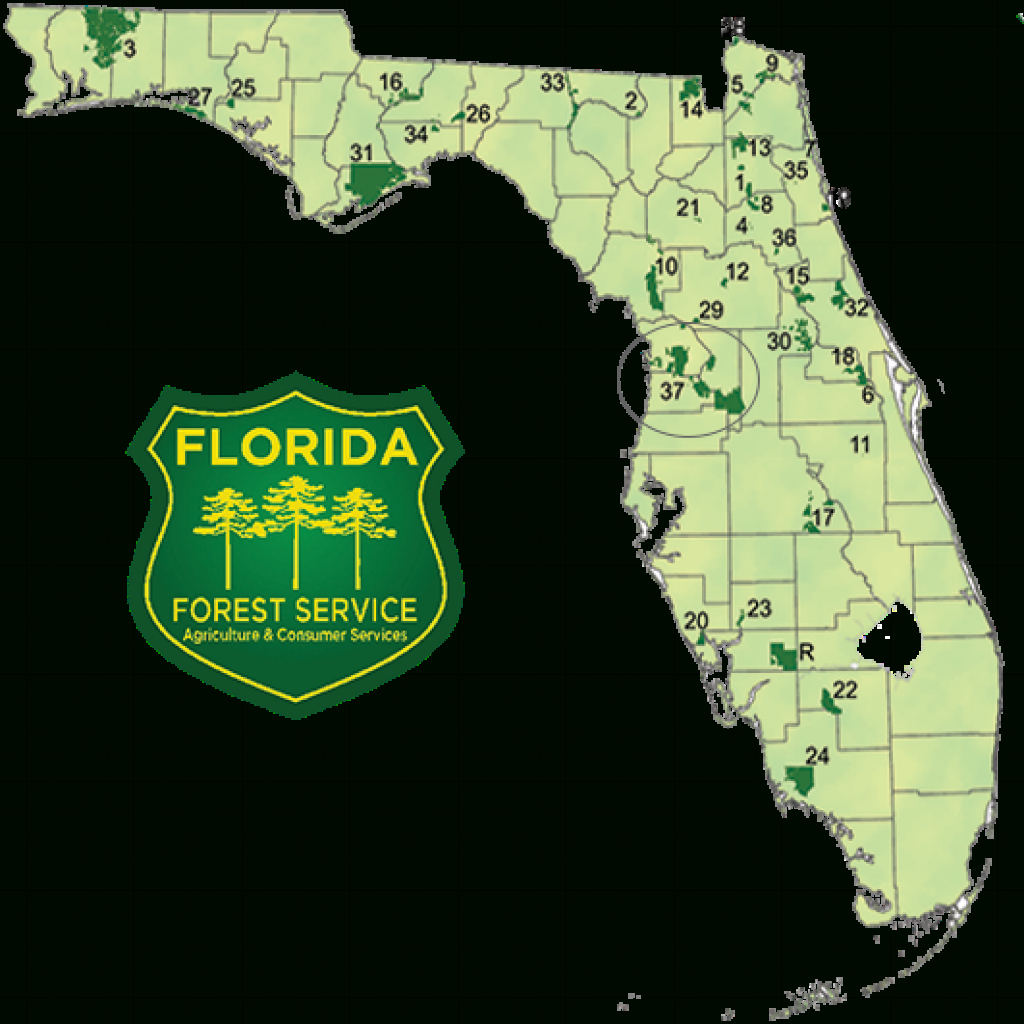 State Forests / Our Forests / Florida Forest Service / Divisions intended for Florida State Parks Camping Map