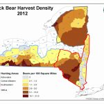 Where Are The Bears In Western New York? | Wnytrails Pertaining To Bears In Washington State Map